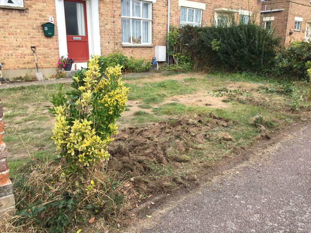 A heavily compacted and worn out lawn!