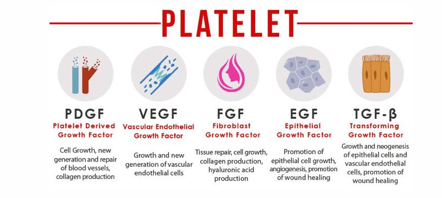 HOW IT WORKS - PRP is an concentration of platelets in concentrated plasma, considered to be a rich source of autologous growth factors. and proteins These factors appear to enhance the formation of new tissue elements & increase circulation to the hair follicles and stimulate their growth. Hair regrowth is a slow process and results may be visible in 12 weeks or longer.
