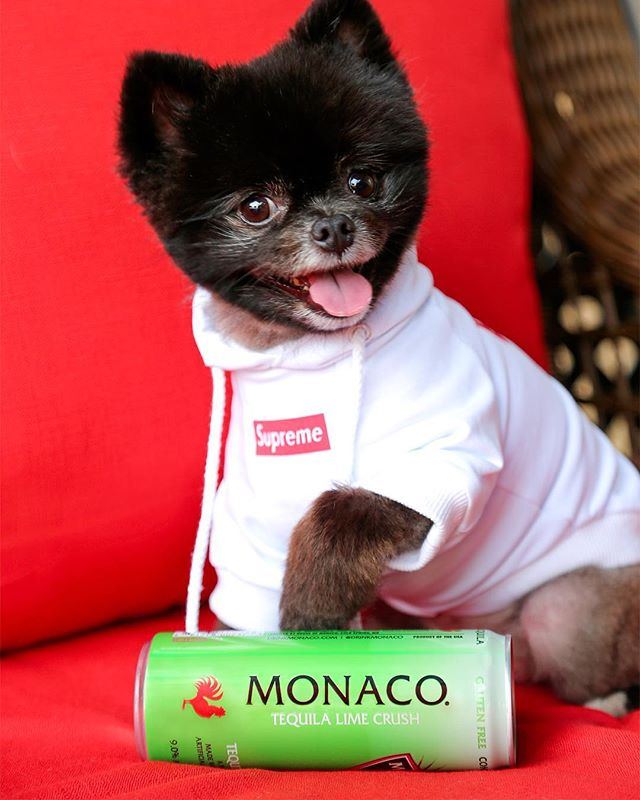 Ruff Tuesday? Time for Yappy Hour🐶 #drinkmonaco