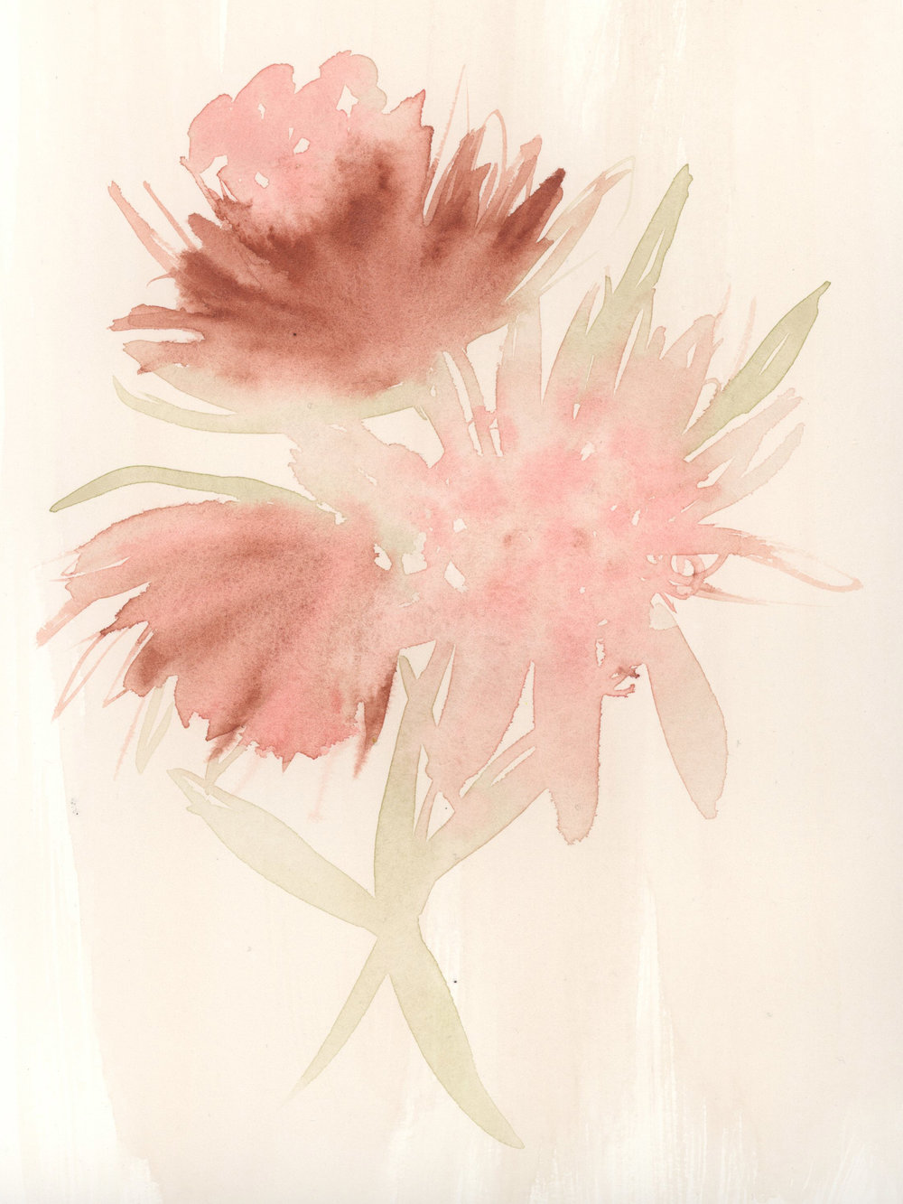 """PROTEA"" - Watercolor on Paper, 8"" x 10"""