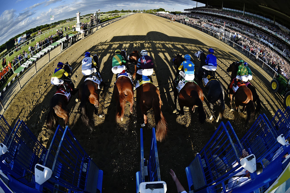 And they're off! The eight horse field  bursts out of the starting gate.