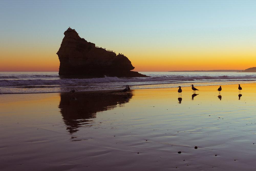 Egrets at Praia da Rocha