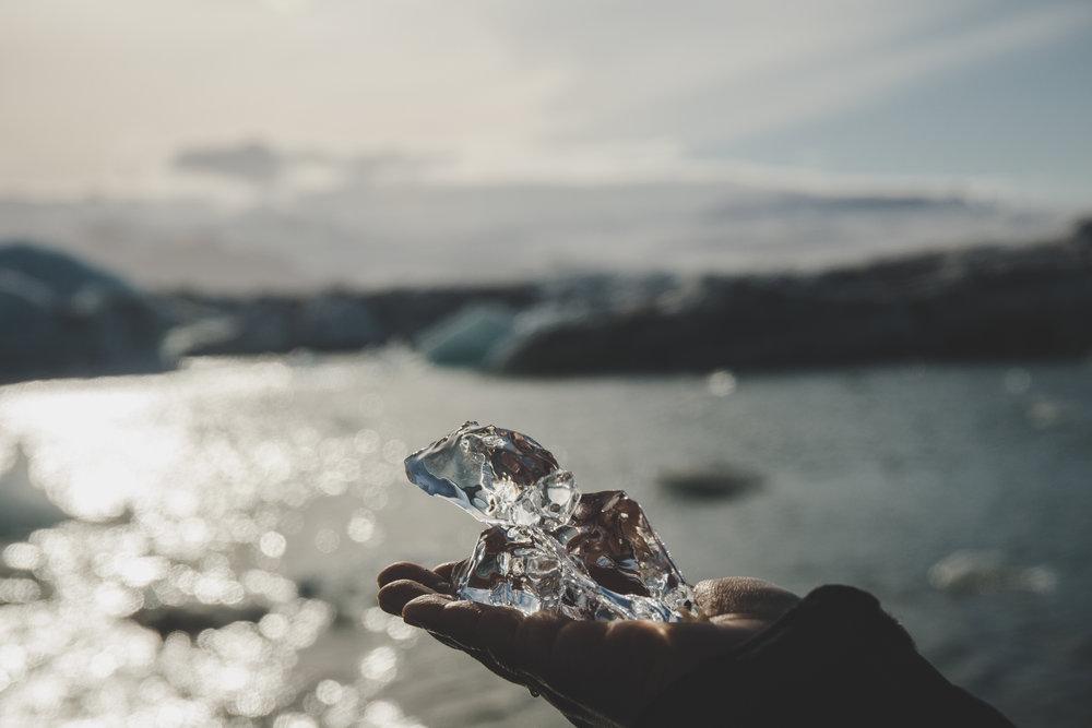 Ice puppy at Jökulsárlón!