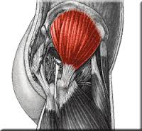 "The mighty Gluteus Medius, in all its glory!   Perhaps the delayed action of the gluteus medius allows an adductory moment of the pelvis, moving the center of gravity medially. This could conceivably place additional stress on the achilles tendon  (via the lateral gastroc) to create more eversion of the foot from midstance on   ""The results of the study demonstrate altered neuromuscular control of the GMED and GMED in runners with Achilles Tendonitis. During running, GMED typically activates before heel strike so as to stabilize the hip and the pelvis. In runners with Achilles Tendonitis, GMED is activated with a delay, which consequently might affect the kinematics of knee and ankle resulting in rear foot inversion. Similarly, GMAX is activated with a delay and for a shorter duration in runners with Achilles Tendonitis. GMAX is the primary hip extensor and via a kinetic chain, a decreased hip extension moment might be compensated by an increased ankle plantarflexion moment which could potentially increase the load on the Achilles tendon.""   Franettovich Smith MM1, Honeywill C, Wyndow N, Crossley KM, Creaby MW. : Neuromotor control of gluteal muscles in runners with achilles tendinopathy. Med Sci Sports Exerc. 2014 Mar;46(3):594-9."