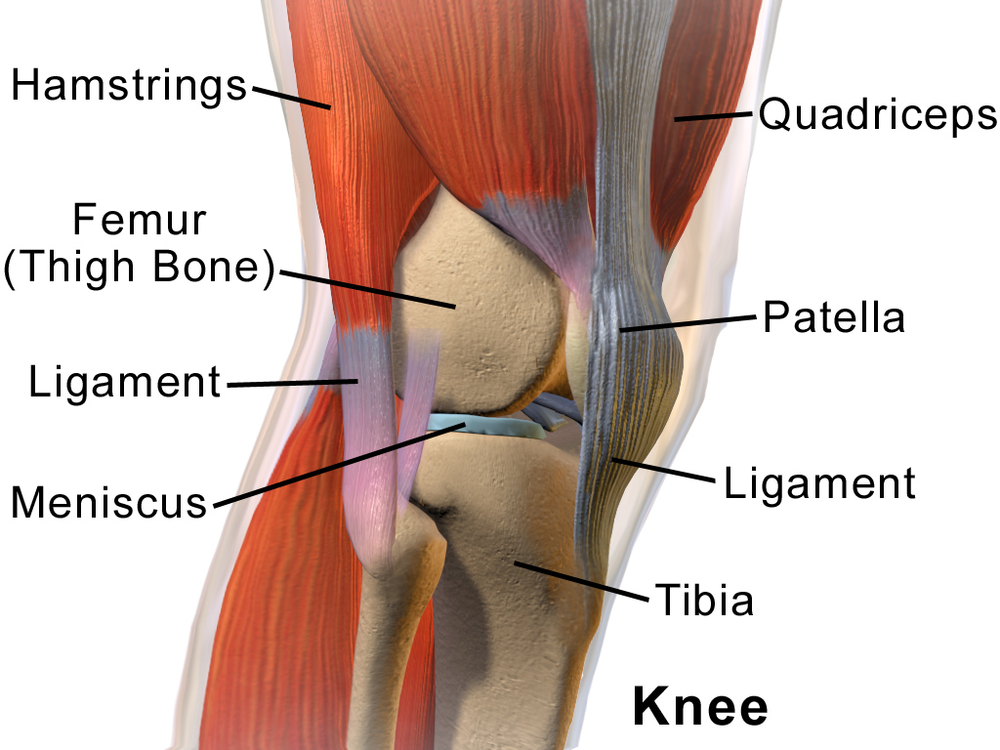 "Isometrics for patellar tendonitis? We are familiar with different modes of exercise: isometric, isotonic and isokinetic. Isometric exercises have a physiological overflow of 10 degrees on each side of the point of application (ie; to do the exercise at 20 degrees flexion, and you have strength gains from 10 to 30 degrees); isotonics and isokinetics, 15 degrees. Taking advantage of physiological overflow often allows us to bypass painful ranges of motion and still strengthen in that range of motion.  In this study, they looked at immediate and 45 minute later pain reduction (not function) comparing isometric (max voluntary quadricep contraction) and isotonic (single leg decline squat) exercises. They also looked at cortical inhibition (via the cortico spinal tract) as a result of the exercises.  Here is what they found: ""A single resistance training bout of isometric contractions reduced tendon pain immediately for at least 45 min postintervention and increased MVIC. The reduction in pain was paralleled by a reduction in cortical inhibition, providing insight into potential mechanisms. Isometric contractions can be completed without pain for people with PT. The clinical implications are that isometric muscle contractions may be used to reduce pain in people with PT without a reduction in muscle strength."" These same results were not seen with the isotonic exercise.  Did the decrease in pain result in the decrease in cortical inhibition (muscle contraction is inhibited across an inflamed joint: Rice, McNair 2010; Iles, Stokes 1987)? Was it a play on post isometric inhibition (most likely not, since this usually only lasts seconds to minutes post contraction) ? Or is there another mechanism at play here? There has been one other paper we found here, that shows cortical inhibition of quadriceps post isometric exercise. Time will tell. In the meantime, start using those multiple angle isometrics! The Gait Guys Rio E, Kidgell D, Purdam C, Gaida J, Moseley GL, Pearce AJ, Cook J.Isometric exercise induces analgesia and reduces inhibition in patellar tendinopathy Br J Sports Med. 2015 May 15. pii: bjsports-2014-094386. doi: 10.1136/bjsports-2014-094386. [Epub ahead of print] http://www.anatomy-physiotherapy.com/28-systems/musculoskeletal/lower-extremity/knee/1163-isometric-exercises-in-patellar-tendinopathy"
