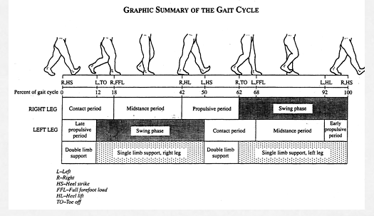 "Random thoughts on the Symmetry of the Gait Cycle    Human gait is cyclical. For the most part, when one limb is engaged on the ground (stance phase), the other is in swing phase (in walking gait there is a brief period of double limb support), then the limbs switch tasks. For us to move cleanly and efficiently one would assume that the best way to do that would be to ensure that both limbs are capable of doing the exact same things, with the same timing, same skill, same endurance and same strength. For this clean seamless motor function, one must assume that there is complete limb symmetry (length, long bone torsion, the same rate and degree of pronation, supination, ankle dorsiflexion, hip internal/external rotation, same strength, power output etc) and one would hope there would be no injuries that had left a remnant mark on one limb thus encouraging a necessary compensation pattern in that limb (and one that would then have to be negotiated with the opposite limb).  For example, when right ankle rocker (dorsiflexion) is impaired, early heel departure will occur and hip extension will be limited. An alteration in right glute function will follow.  One could theorize that the left step length (the length of measure from right heel strike through to left heel strike) would be shortened. This would cause a premature load onto the left limb, and could very well force the left frontal plane to be more engaged than is desirable. This could lead to left core and hip frontal plane weakness and compensation patterns to be generated. To complicate the cyclical scenario, the time usually used to move sagittally will be partially used to move into, and back out of, the left frontal plane. This will necessitate some abbreviations in the left stance phase's timely mechanical events. Some biomechanical events will have to be abbreviated or sped through and then the right limb will have to adapt to those changes. These are simple gait problems we have talked about over and over again here on the gait guys blog. These compensation patterns will include weaknesses as part of the pattern, and fixing those weaknesses does not address the right ankle rocker problem. Fixing said weaknesses merely encourages the brain to possibly continue to perpetuate necessary tightnesses in other muscles and motor linkages and engrain the compensations further or more complexly.  It is easy to find something weak, it takes a sharp brain to find the sometimes silent sparking event underneath it all. One's focused task should be, are you able to find the problem in this never ending loop of compensations and find a way to unwrinkle the system one logical piece at a time, or will you just chose to strengthen the wrinkled system and hope that the new strength on top of the compensations is adequate for you our your client ? One should not have to do daily or weekly rehabilitative sessions and homework to negate and alleviate symptoms, this is a far more durable machine than one that needs daily support.  Rather, one that ""seems"" to need daily supportive homework/rehab is one that likely needs the underlying limitation to be uncovered. However, there are always exceptions. If one has a fixed issue, for example Foot Baller's Ankle, then regular doses of lower limb anterior compartment work may be necessary to ensure that further ankle dorsiflexion range is not eroded.     Now, lets add another wrinkle to the system.  What if there were problems before any injuries ?  Meaning, what if there were problems during the timely maturation and suppression of the primitive reflexes ? Or problems in the timely appearance or maturation of postural reflexes? A problem in these areas may very well result in a central or peripheral nervous system malfunction and a representation of such in one's movement and gait.  But, that is a discussion for another time.   Shawn and Ivo, the gait guys   photo: courtesy of Thomas Michaud, from the excellent textbook, Human Locomotion"