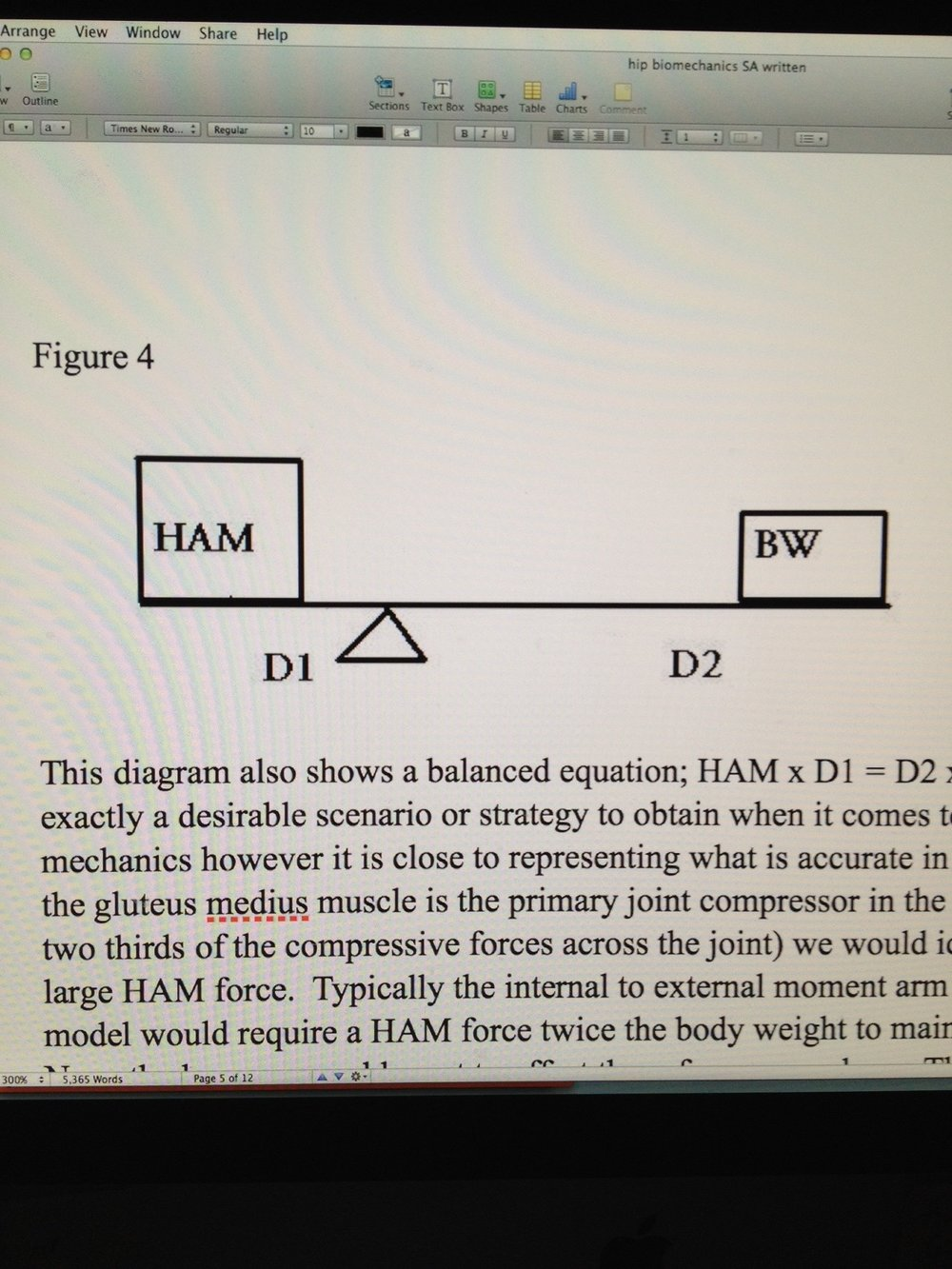 Hip Biomechanics: Part 4 of 6   This diagram (Figure 4) also shows a balanced equation; HAM x D1 = D2 x BW.  (where HAM=hip abductor/g.medius, D1 and D1 are lever arms, BW= body weight). This is not exactly a desirable scenario or strategy to obtain when it comes to joint compression mechanics however it is close to representing what is accurate in the human hip.  Since the gluteus medius muscle is the primary joint compressor in the frontal plane (it applies two thirds of the compressive forces across the joint) we would ideally never want such a large HAM force.  Typically the internal to external moment arm ration is 2:1 thus this model would require a HAM force twice the body weight to maintain a balanced system.  None the less, we would want to offset these forces somehow.  The only way to offset the large HAM would be to move the pivot point closer to the BW thereby increasing the D1 (increase D1 and you can reduce HAM and thus joint compression load).  In a physical person the pivot point, the joint axis of movement, is fixed so there is no real strategy to improve the situation without surgery.  These patients are unlucky and have no strategies to improve their high compression forces unless they loose weight; due to the fact of the 2:1 ratio, for every pound of body weight loss there is a 2 pound force decrease in the HAM.  Obesity is going to wreak havoc on our populations hips.  As mentioned previously, the model presented is very much incomplete.  Muscular forces surround the joint, movement occurs in every cardinal plane and there is acceleration of body segments which requires even greater muscular contraction isometrically, concentrically and eccentrically.  These factors all considered, it has been calculated that the total hip force crossing the joint can reach 3 times the body weight during walking.   This force is welcomed for maintaining joint stability but it can be an unwelcome force in a degenerative arthritic joint where the cartilage is less pliable and flexible.  The loading forces in an arthritic joint rhythmically pass into the acetabulum and femoral head as a result of the compromised cartilage necessitating increased bone mass and sclerosis within them.  This compromised arthritic joint will have some minor laxity due to the loss of the cartilage bulk and thinning of the acetabular labrum.  Thus the joint will have a slight increase in translatory/accessory movement and require greater muscular contraction to minimize/stabilize these movements.  These increased forces will be unwelcomed as they will generate more pain.  Additionally, the increased movements and degenerative debris within the joint will cause irritation and inflammation of the joint capsule and synovial lining causing further pain.  This entire scenario will cause the patient to investigate conscious and subconscious gait strategies to reduce the compression across the joint, in other words, they will essentially seek gait strategies that will reduce HAM (gluteus medius contraction) and increase the D1 internal moment arm.  These strategies will reduce the perpendicular joint compression forces that likely will be causing pain but if performed well they will be devastating to the normal frontal plane equilibrium since the gluteus medius muscle will be essentially shut down and inhibited.  Thus, the patient's gait strategy will give us the compensated Trendelenburg gait pattern.  The uncompensated Trendelenburg gait will show a dropping of the contralateral hemipelvis on the swing side during gait, this is the pathologic gait pattern we see when the patient has not implemented strategies to reduce their pain but it is more likely seen when the patient is not yet at the painful stage in which they need to implore strategies to avoid the movement.  Comparatively, compensated Trendelenburg gait pattern will display a lifting of the contralateral hemipelvis.  This strategy is not implemented by activation of the gluteus medius on the side in question, rather it is a compensation move performed by shifting the patient's body weight over the pathologic hip thus causing the hip that is dropping to be passively raised into a more normal range in the frontal plane.  This passive frontal plane move by the patient over the painful hip is at first difficult to embrace logically as one does not expect to want to load their body weight further over top of the painful hip.  However, upon investigation of the mathematical equation one will see that the shift of body weight (BW) over the affected hip will significantly reduce the D2 external moment arm, significantly increase the D1 internal moment arm and thus deliver us the desirable significant reduction in the HAM gluteus medius compressive contraction across the painful hip.  Thus, the pathologic compensation gait pattern in the frontal plane will markedly reduce the patient's hip pain.  From a kinetic chain perspective however, there is always a price to pay.  This implemented strategy of ipsilateral trunk lateral flexion is performed by utilization of the thoracolumbar paraspinals and quadratus lumborum on the painful hip side. The resulting abnormal muscular and joint strategies now imparted on the lumbar spine and pelvis interface frequently begins a cascade of muscular and joint pain in the low back and abnormal loading of the lumbar discs.  The strategy also begins an unwelcome increased loading of the non-painful hip as the patient is loading the hip greater than normal due to the height from which the hip and pelvis drop from the compensated Trendelenburg position.  In other words, by protecting the painful arthritic hip from increased loads we sacrifice the healthy hip for a period of years until the forced finally amount to enough damage that pain begins here as well.  Fortunately, we have the ability to mediate some of these dramatic movements and forces by using logic and a cane.  By placing a walking cane in the hand opposite to the painful hip and by asking the patient to contact the cane with the ground when they initiate contact with the painful limb we can offset some of the excessive compensations and forces.  When the cane contacts the ground the patient is to apply a mild to moderate downward force through the cane via arm contraction.  This downward force will afford us a resultant upward ground reactive force through the cane delivering us a lifting effect on the dropped hemipelvis side (dipping hip side/non-painful side).  This strategy will allow us a more passive shifting of the body weight (BW) over the painful hip side without having to lift or pull the body weight (BW) over the painful hip with the hip abductor muscles (HAM).  These passive forces (which can be more than  half of those normally needed to be generated by the HAM) will help to markedly reduce the muscular forces needed by the spinal and quadratus muscles while also rendering the desired marked reduction in HAM compressive forces across the painful joint.  It is interesting to note that the further the cane is placed from the body, the longer its moment arm and thus the less downward force necessary by the patient's arm.  It is quite possible, that if used correctly, a cane can almost completely offset the required contralateral HAM force.  Another passive strategy would be to carry objects (purses, books, grocery bags, etc) on the affected hip side.  This action will also balance the teeter-totter  in favor and thus reduce the muscular forced necessary to perform the same task.  It must be noted however that increasing any body load is undesirable and should be avoided not so much because of issues pertaining to the painful degenerative hip but because of the increased load on the healthier hip.   Shawn and Ivo, The Gait Guys   All materials are copywrited. Don't rip our stuff off ! Just ask nicely if you can link or reference. Play nice, play fair.