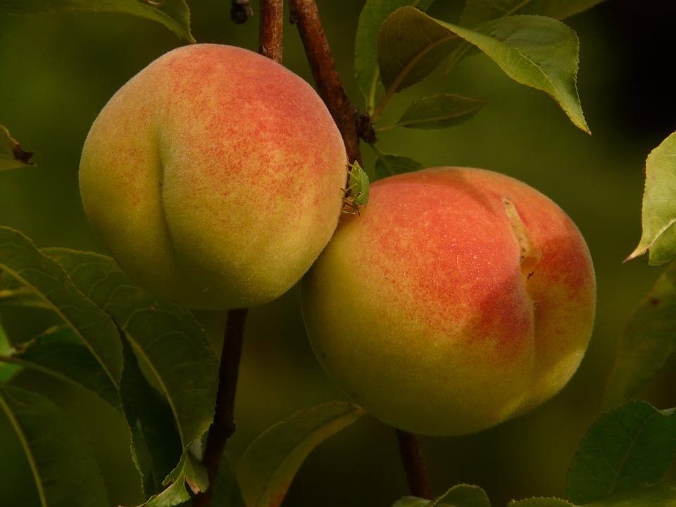 peaches 1.jpg
