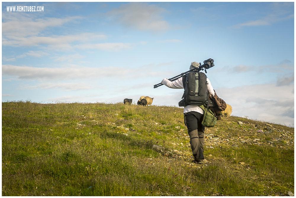 Vestrahorn -Follow that sheep