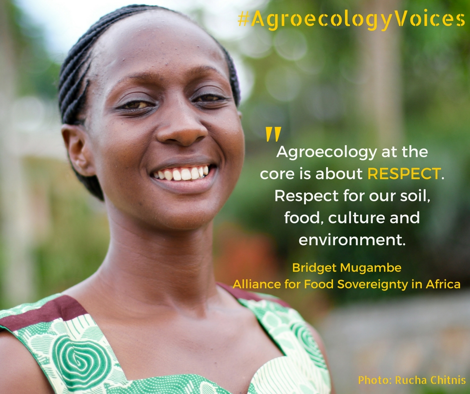 Our Strategic Plan seeks to revolutionize Agroecology around the globe.  - Learn More →