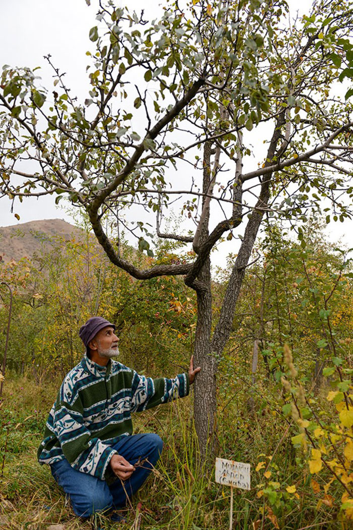 rasht-valley-miroslav-with-tree-no-2.jpg