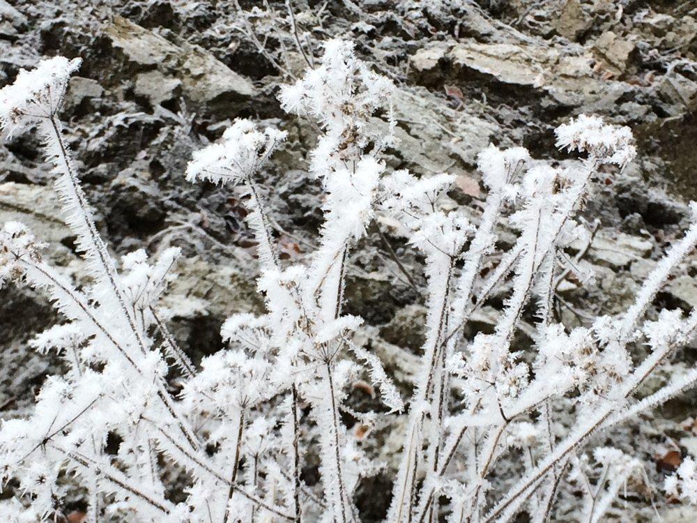 Frostblumen im Ackerfeld