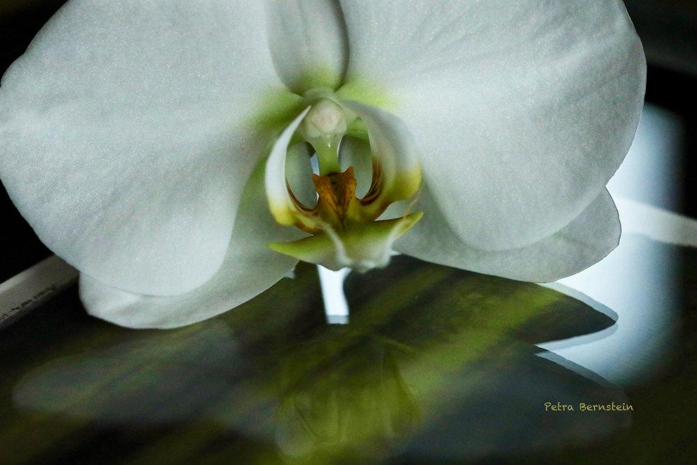"Orchid on ""Rothko Remastered"" III"
