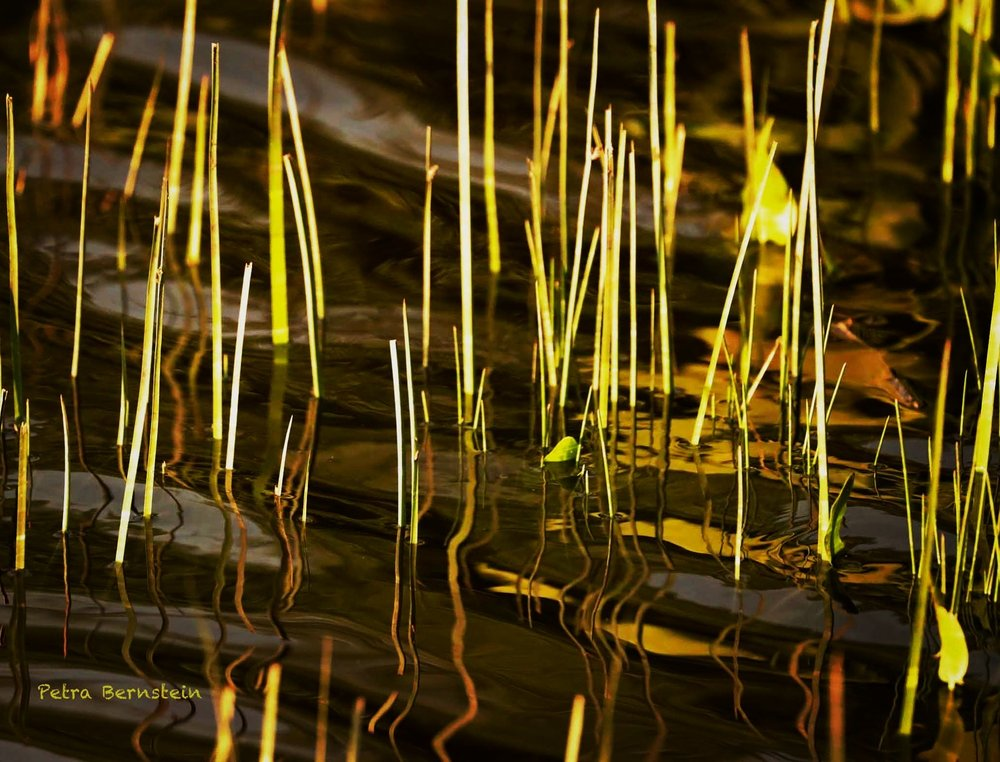 Chartreuse Reflections