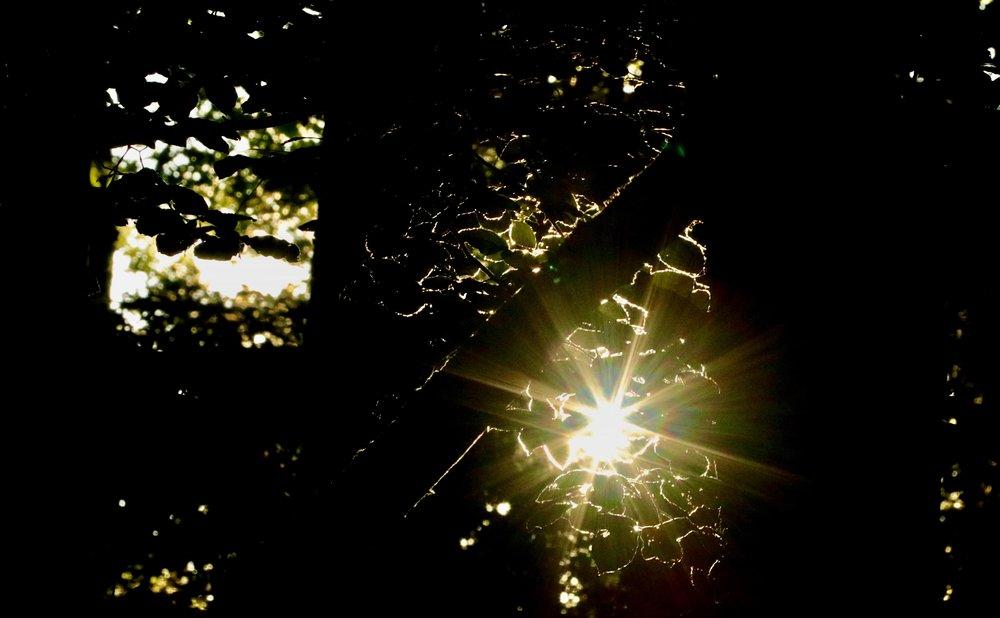 Abendsonne im Wald II