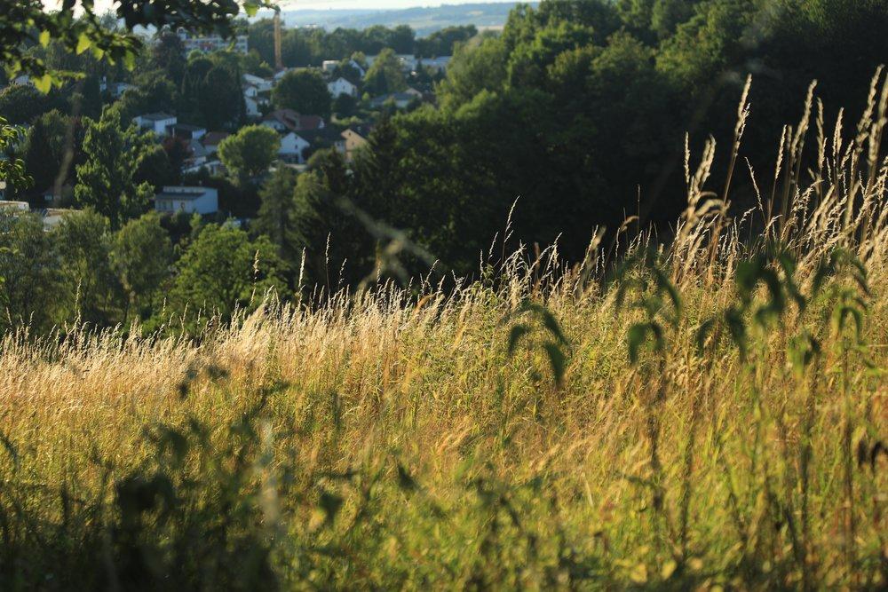 Sallmansberg im Sommer