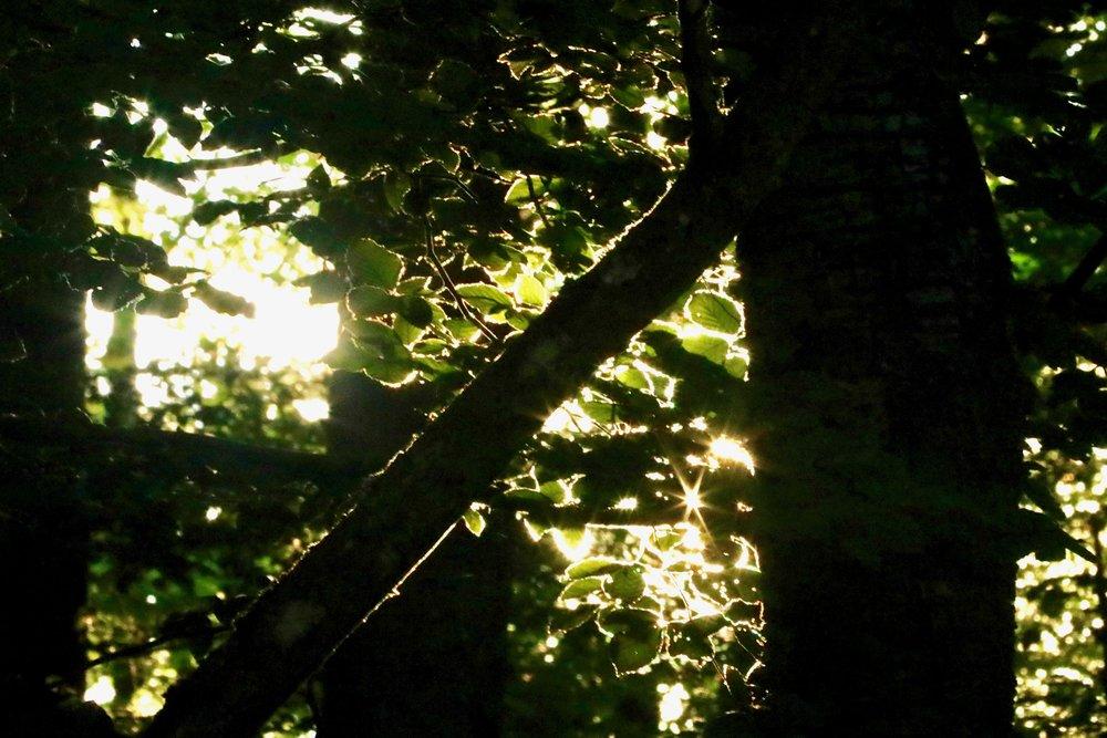 Abendsonne im Wald