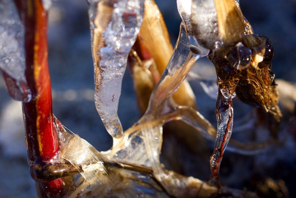 Frozen Complexity