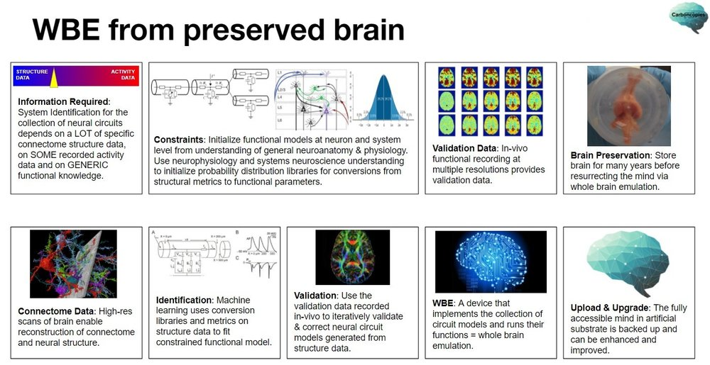 WBE-from-preserved-brain-20180407.jpg