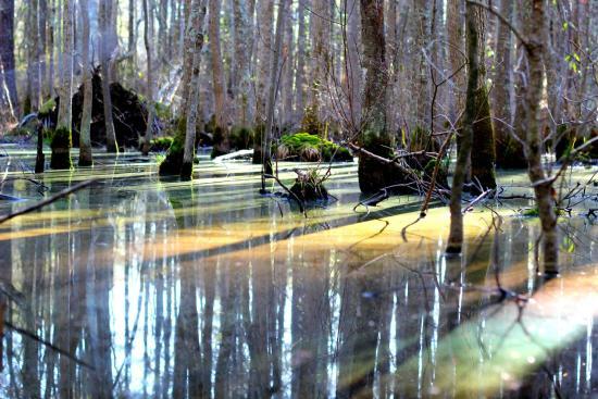 Image Source: Pocomoke River State Park tripadvisor.com