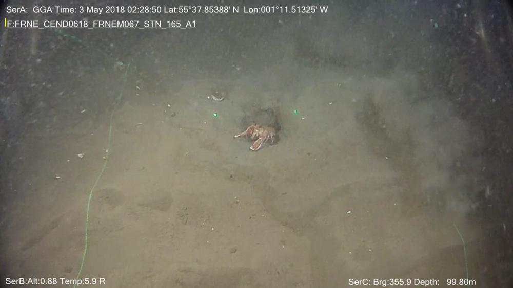 Environmental baseline benthic seabed surveys