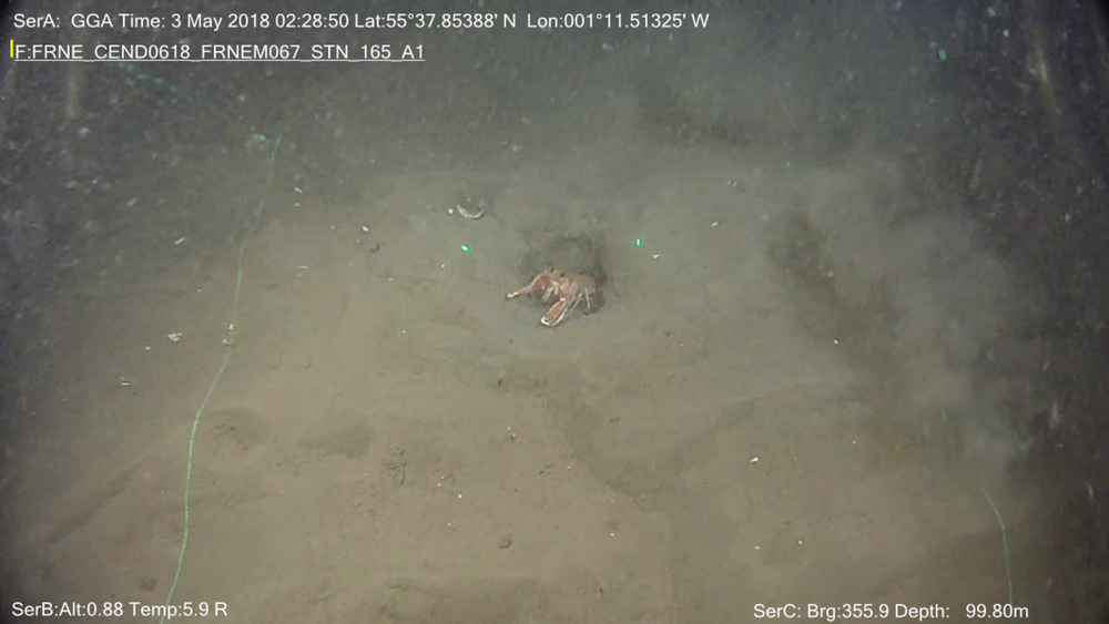 Benthic Baselines - Many survey companies use multiple paralleled lasers to provide an indication of scale to video reporting products. This removes the need for scale bars and the time required to set up an ROV to reposition and conduct a specific measurement.In this image, the two laser points are spaced 10cm apart; the size of the hermit crab is 6 +/- 0.5 cm.Note that undulations in the seabed topography are also illuminated by the 2 line lasers.