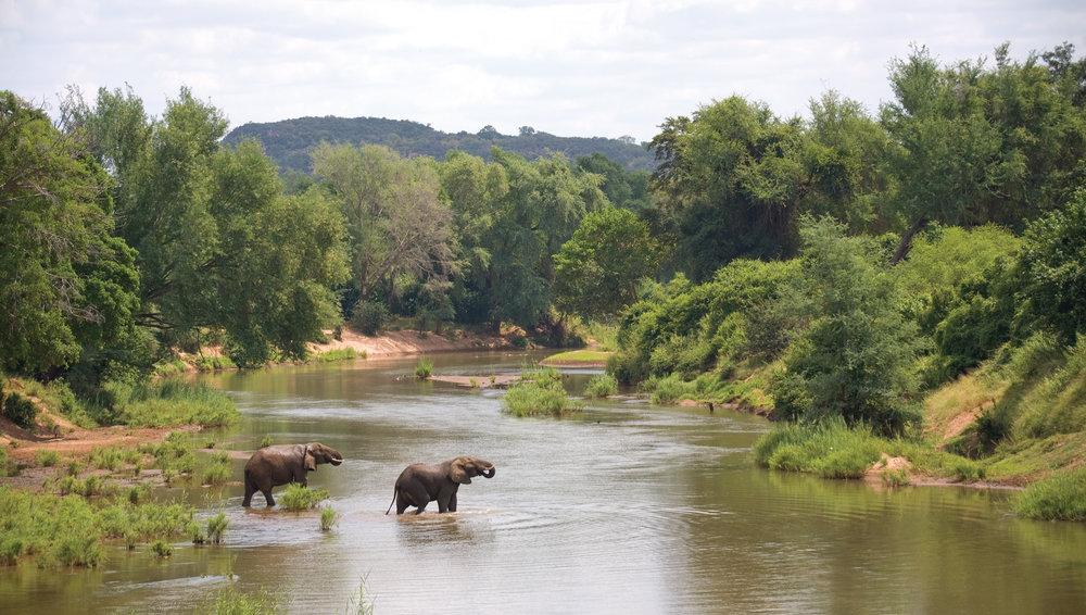 Eléphants traversant rivière The Outpost