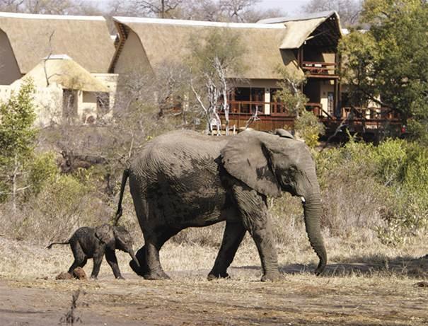 Maman et bébé éléphant Elephant Plains