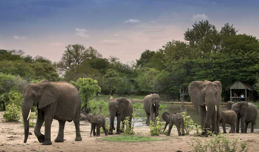 Famille d'éléphants Tanda Tula