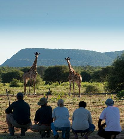 Safaris à pied ambiance Jurassique Parc - à pied proche des girafes