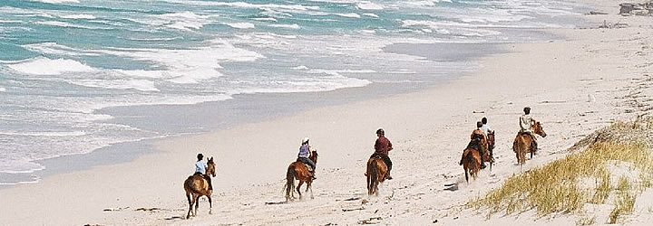 Promenade à cheval sur Plage De Kelders Private Retreat