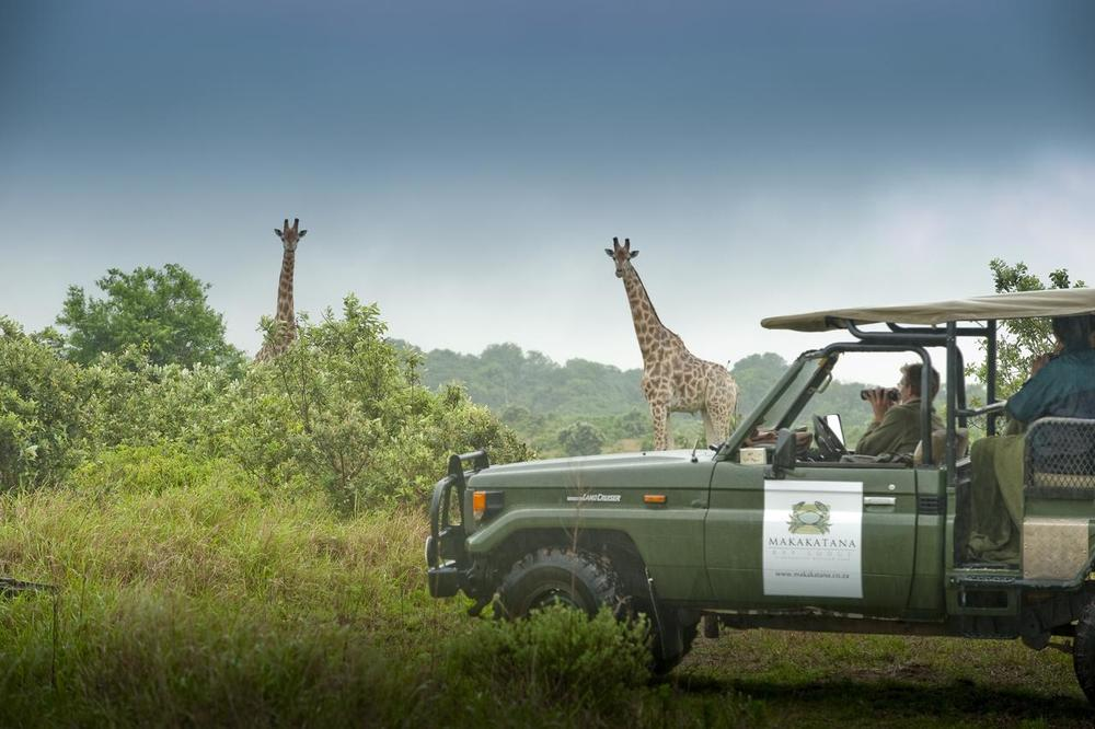 4X4 en safari devant giraffes Makakatana Bay Lodge