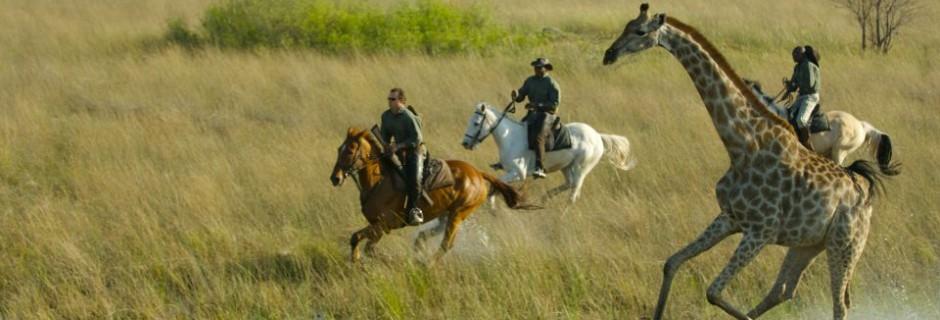 Safari à cheval devant girafe Macatoo Camp