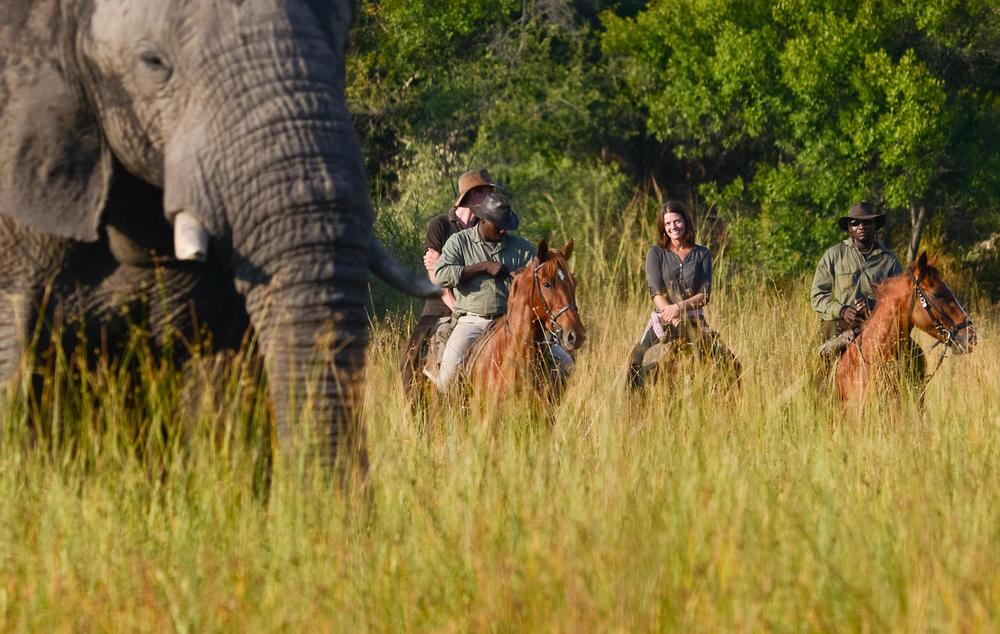 Safari à cheval devant éléphants Macatoo Camp