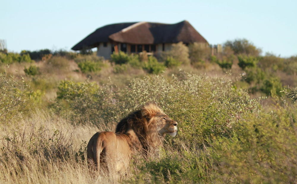 Vue du lodge de la brousse avec lion Tau Pan