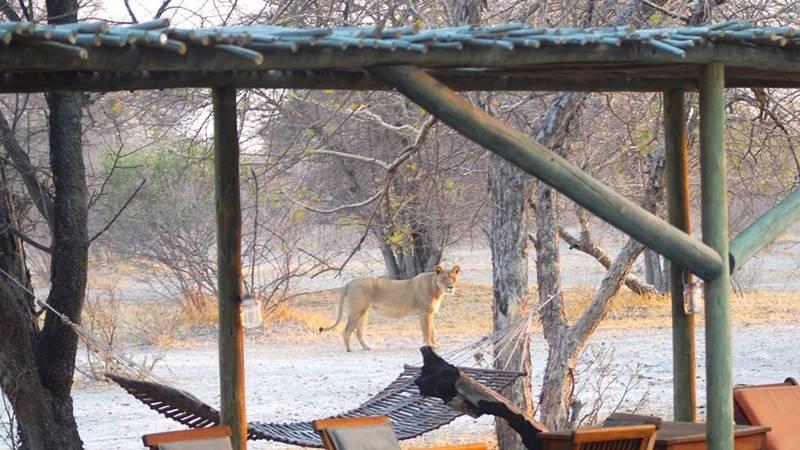 Lionne Haina Kalahari Lodge