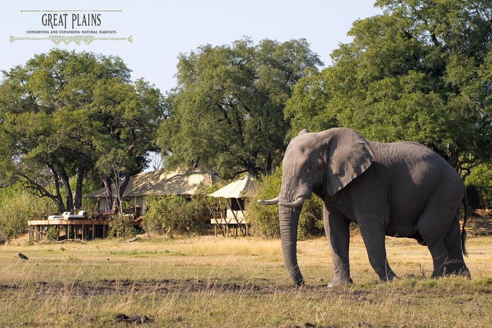 Eléphant devant Zarafa Camp