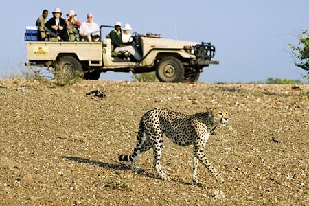 Safari en 4X4 suivant léopard Mashatu