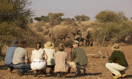 Safari à pieds Mashatu