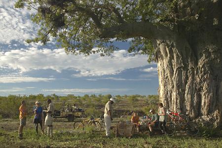 Déjeuner sous arbre Mashatu