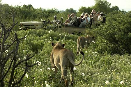 Safari en 4X4 suivant lionnes Mashatu