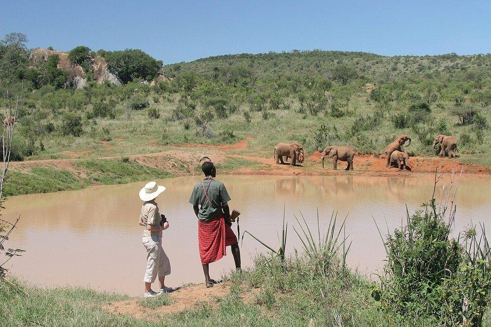 Eléphants vue en safari à pieds Sabuk