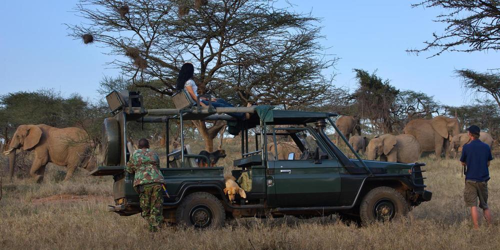 4X4 en safari troupeau d'éléphants Ol Malo
