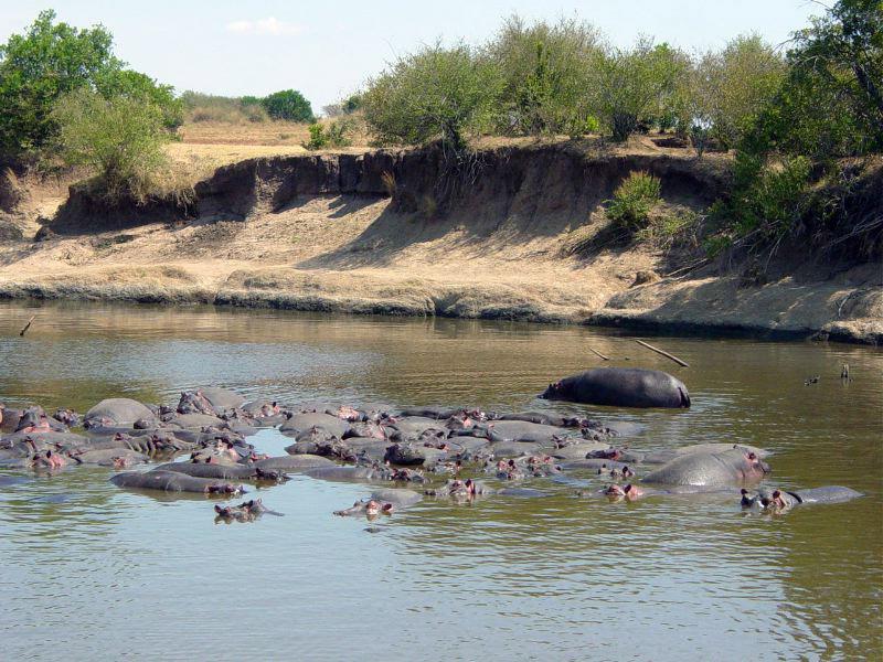 Hippopotames Hippo Point