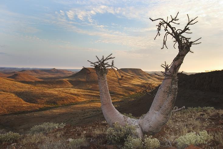 Baobab Etendeka