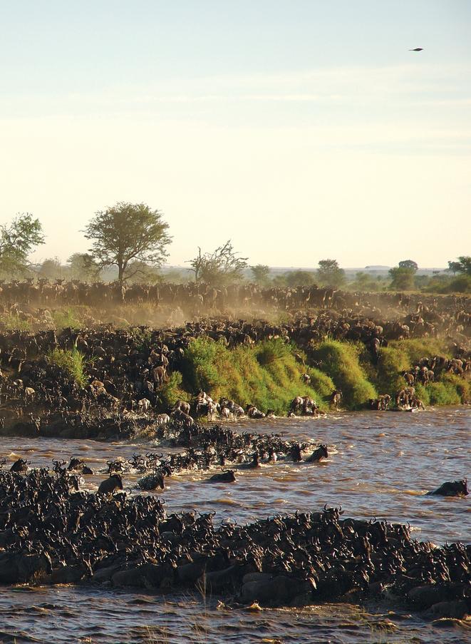 Migration Sayari