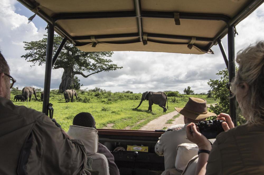 Eléphant safari en 4X4 Kwihala Camp