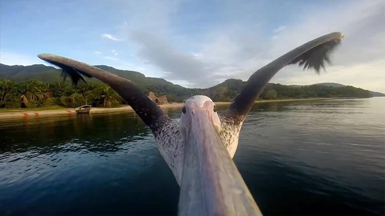 Queue de Baleine Greystoke Mahale