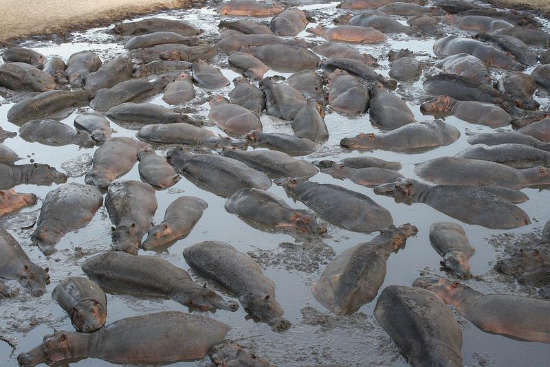 Lit d'Hippopotames Chada Katavi