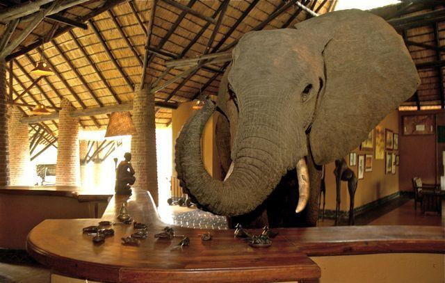 Eléphant à la réception de Mfuwe Lodge
